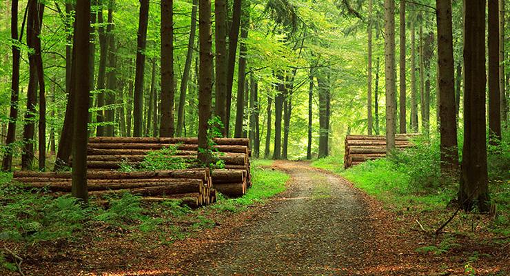 Umweltfreundlichkeit von Holz